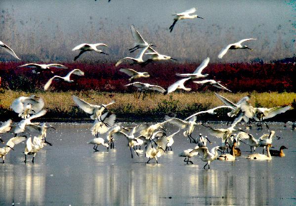 壁纸 动物 鸟 摄影 桌面 599_417