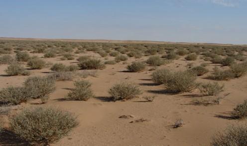 防风固沙保持水土
